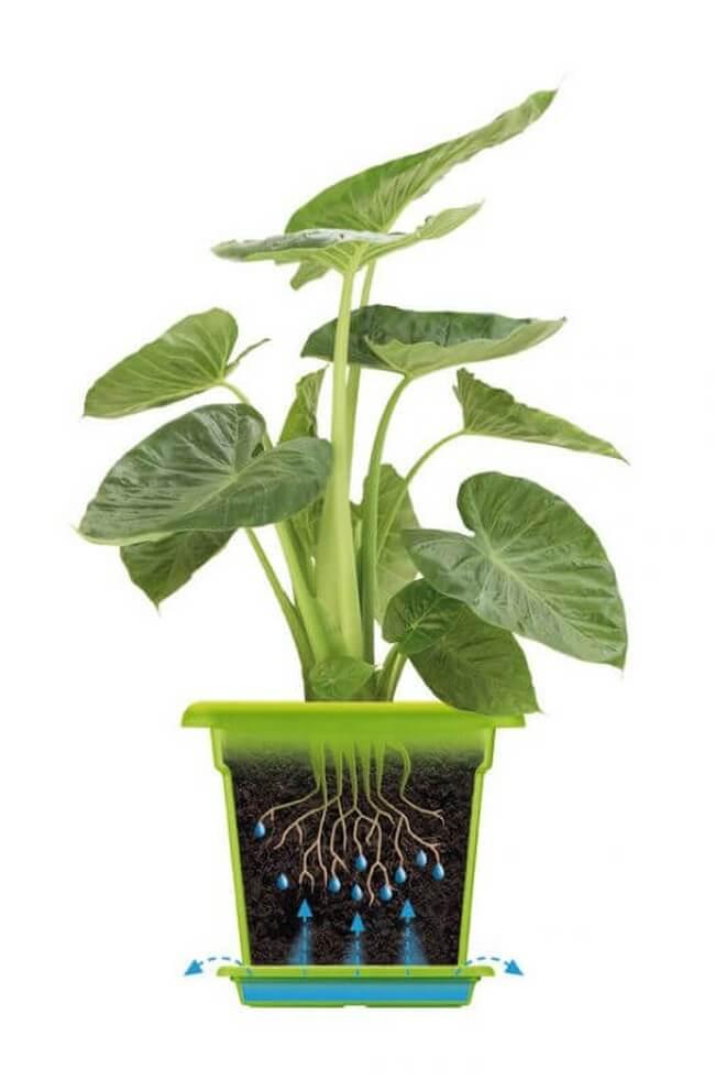 elho green basics garden xxl n v nyl da 80cm t bb sz nben 8711904154998. Black Bedroom Furniture Sets. Home Design Ideas