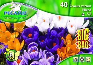 Pegasus Crocus Großblumiger Krokus Mix vegyes krókusz virághagymák BIG BAG