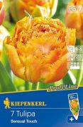 Kiepenkerl Tulipán P.L.  Sensual Touch